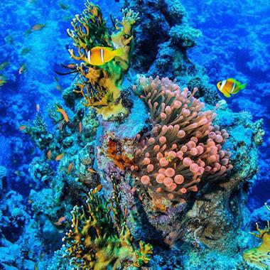 搭乘潛水艇深入紅海