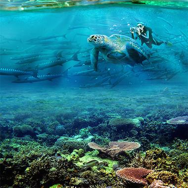 美人魚島仙境潛水樂