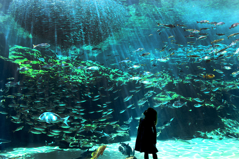 Kujuku Island Tour or Kujukushima Aquarium Tickets