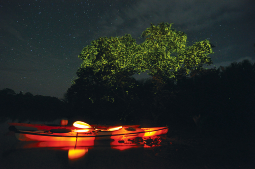 Bohol Firefly Tour at Loay River or Abatan River