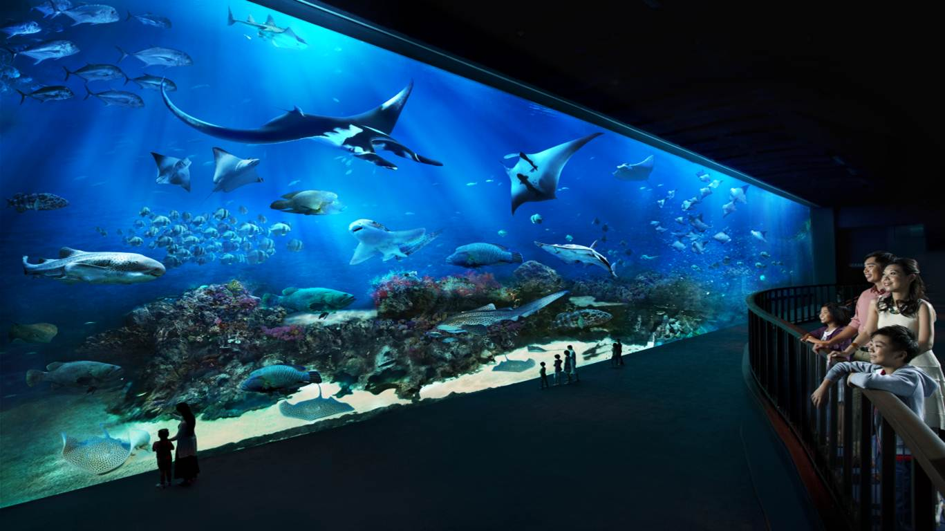 Image gallery sea aquarium for Aquarium video