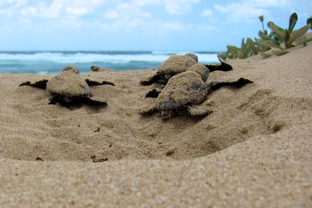 Selingan Turtle Island 2D1N Tour