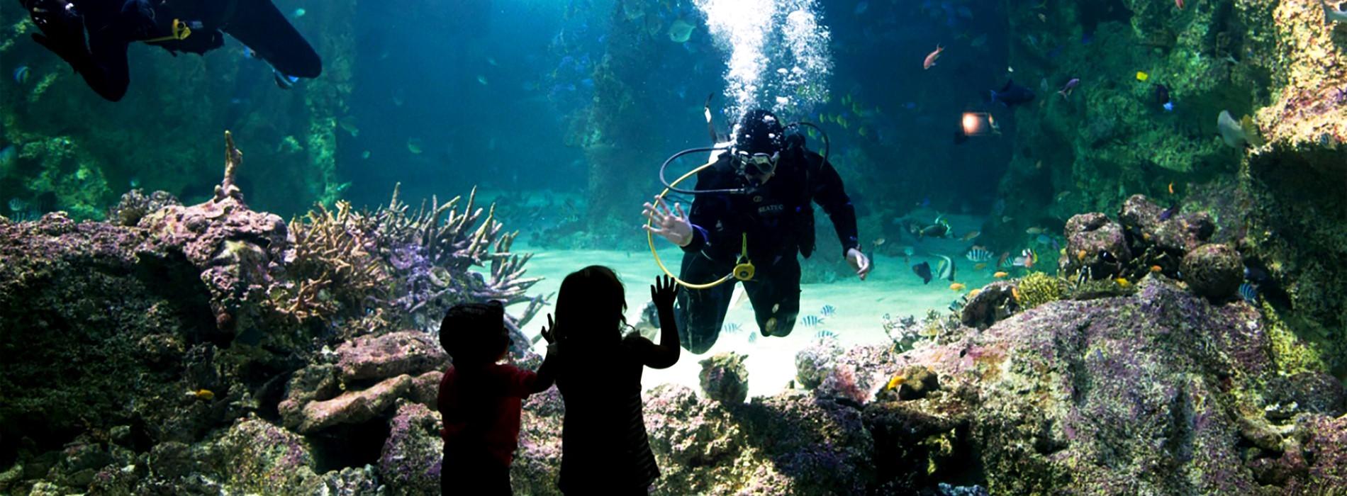 Sea Life Sydney Aquarium Tickets Kkday Thailand Et Ticket Ocean World Only Child